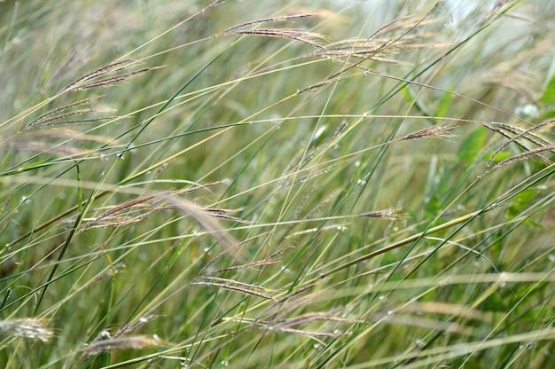 Branche d'herbe avec des feuilles et de belles fleurs de printemps