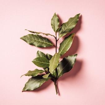 Branche de laurier sur fond rose