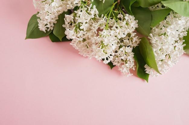 Branche de lilas blanc sur un espace de copie de fond rose