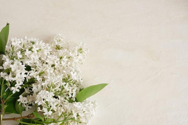 Branche de lilas blanc sur un espace de copie de fond texturé clair