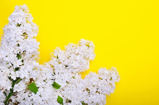 Branche de lilas blanc sur une surface jaune