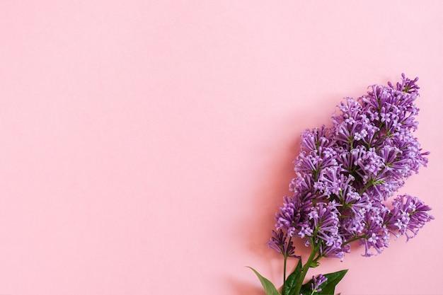 Branche de lilas sur fond rose avec espace de copie pour votre texte. toile de fond bonjour printemps, journée de la femme modèle de conception