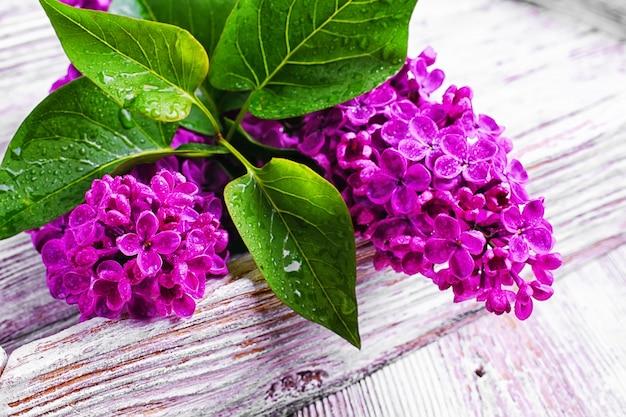 Branche avec lilas de printemps