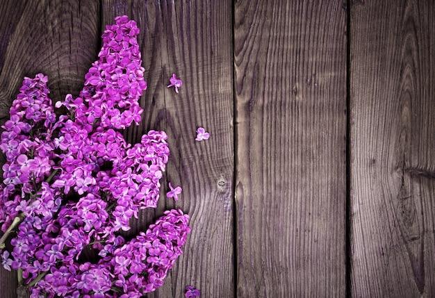 Branche d'un lilas violet