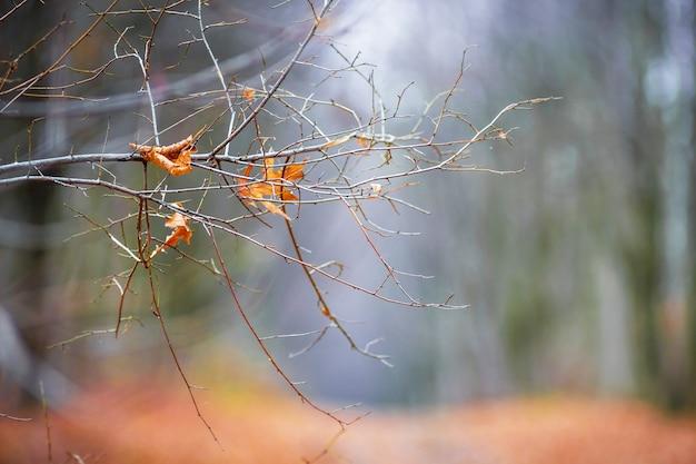 Branche nue d'un arbre avec les dernières feuilles sèches sur la forêt