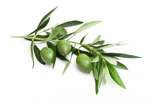 Branche d'olives vertes