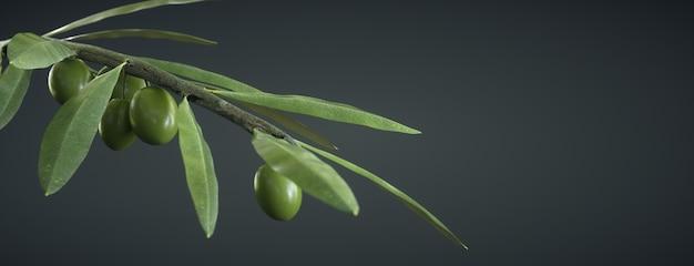 Branche d'olivier sur sombre, avec des olives et des feuilles
