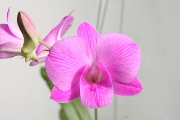 Branche d'orchidée violette sur espace gris