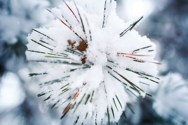 Branche de pin en forme de flocons de neige recouverts de neige