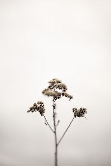 Branche de plante mince isolée unique