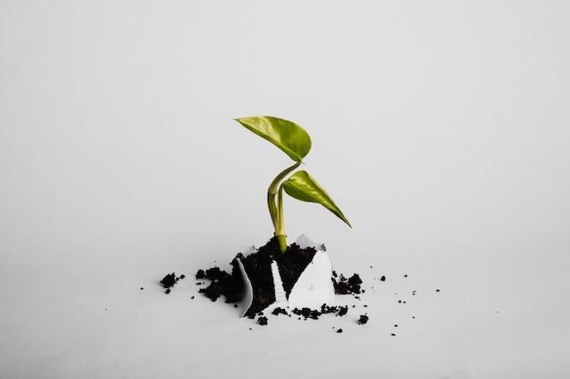 Branche de plante poussant à travers le papier
