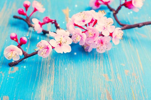 Branche de sakura en fleurs.