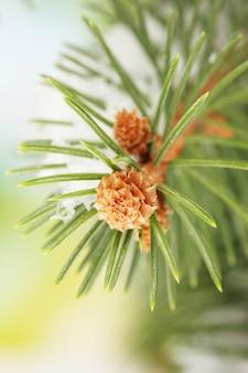 Branche de sapin avec de la neige, sur fond vert