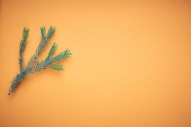 Branche de sapin de noël sur un fond coloré, une place pour le texte