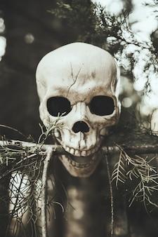 Branche de sapin piquant crâne en forêt