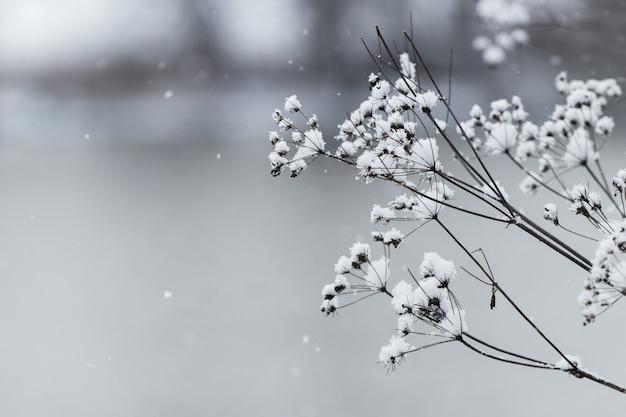 Branche sèche couverte de neige d'une plante de terrain sur un arrière-plan flou