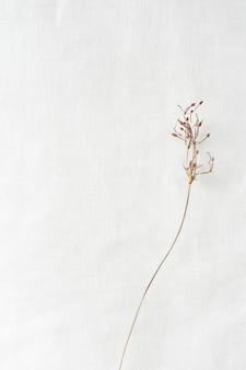 Branche séchée sur un papier blanc