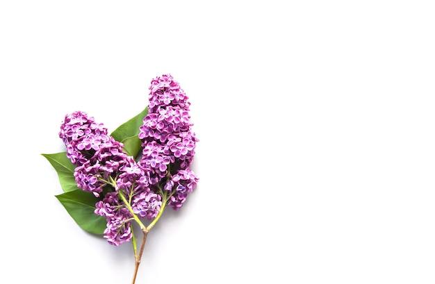 Branche de syringa avec des fleurs.