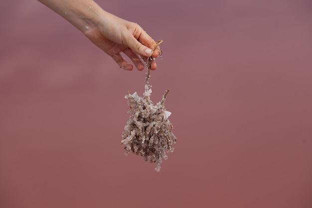Une branche tombée dans un lac salé rose était recouverte de gros cristaux de sel rose, utilisé en cosmétologie et en médecine populaire.