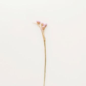 Branche végétale à petites fleurs roses