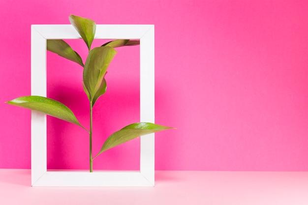 Branche verte et cadre