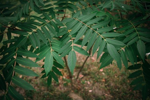 Branche verte feuilles plante tropicale