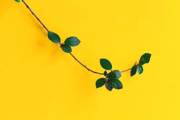 Branche verte sur fond jaune vif concept de minimalisme grandissant branche comme symbole de croissance et de développement personnel