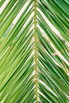 Branche verte de palmier dattier libre