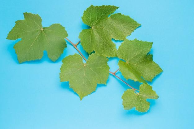Branche verte de raisin sur bleu