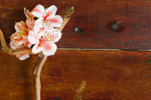 Branche vue de dessus avec des fleurs