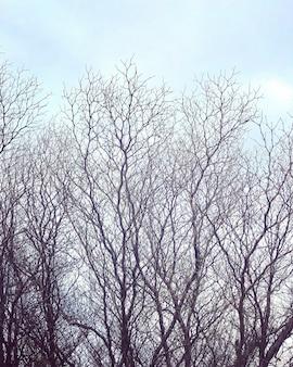 Les branches de l'arbre sans feuilles avec le ciel pas clair