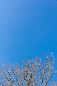 Branches d'arbres abstraites isolés sur fond de ciel