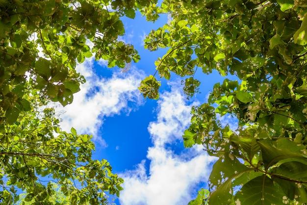 Branches d'arbres sur ciel bleu