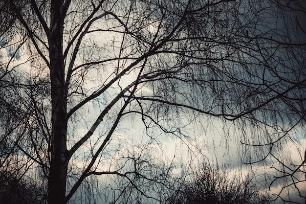 Branches d'arbres contre un fond de ciel nuageux pluvieux