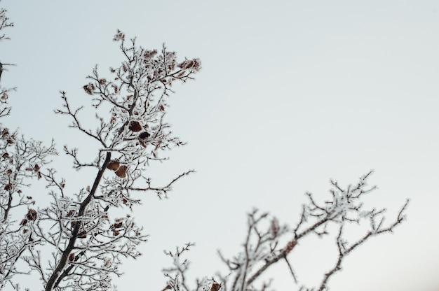 Branches d'arbres couvertes de givre