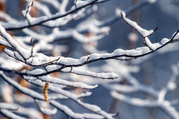 Branches d'arbres couvertes de neige dans la forêt sur fond sombre