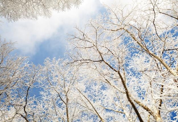 Branches d'arbres couvertes de neige en hiver contre le ciel