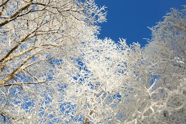 Branches d'arbres couvertes de neige en hiver par une journée froide