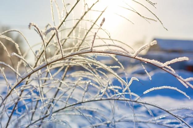 Branches d'arbres dans le gel sur un fond de ciel bleu.
