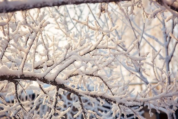 Branches d'arbres dans la neige journée d'hiver ensoleillée.