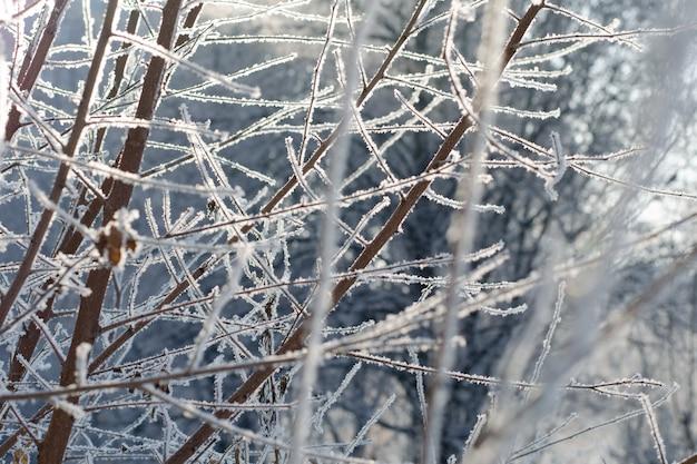 Branches d'arbres enneigés