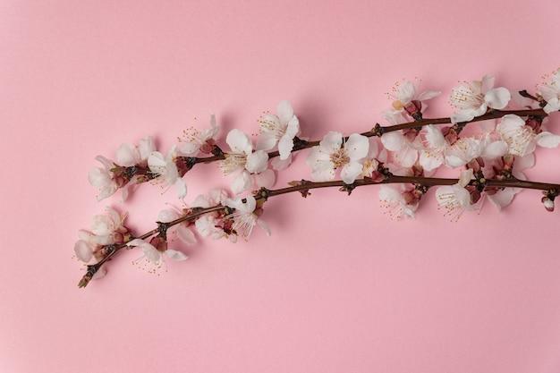Branches d'arbres en fleurs avec des fleurs blanches sur fond rose. modèle. toile de fond.