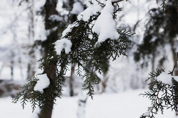 Branches d'arbres givrés en hiver