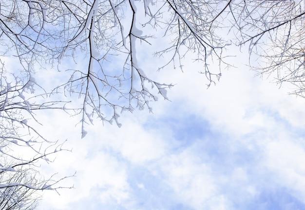 Branches d'arbres avec de la neige duveteuse sur fond d'un beau ciel lumineux. fond d'hiver.