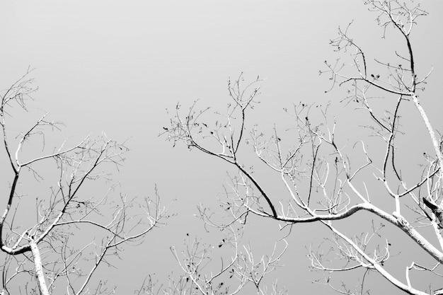 Branches d'arbres nues, monochromes