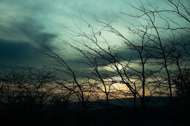 Branches d'arbres nus sur fond de coucher de soleil