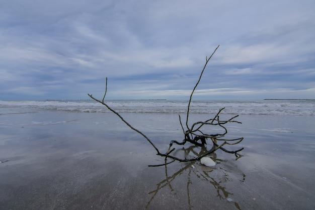 Branches d'arbres placées sur la plage.