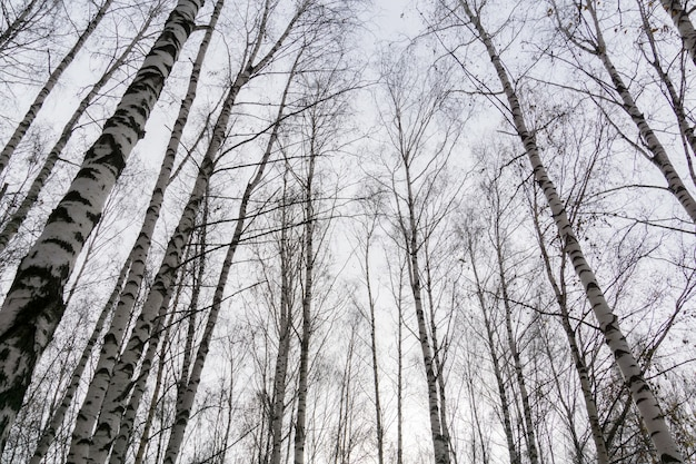 Branches d'arbres sans feuilles