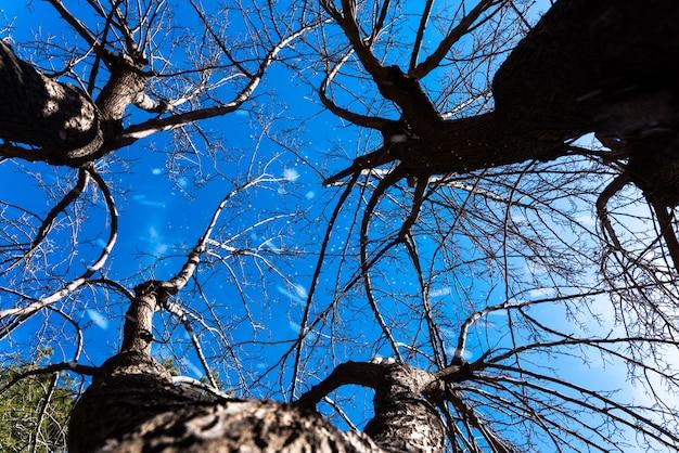 Branches d'arbres secs d'en bas sur fond de ciel bleu un jour de neige