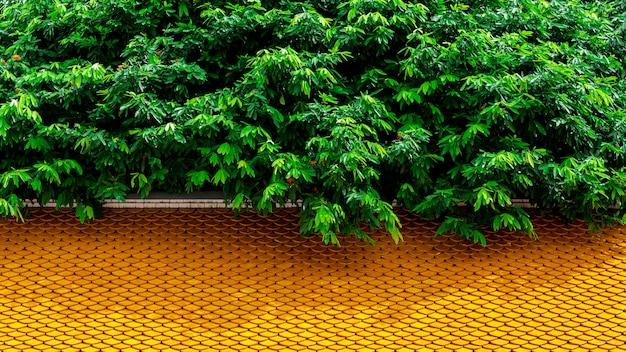 Les branches d'arbres verts couvrent le vieux toit de tuiles de céramique.